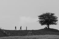 Christina Andersson - Ensamma trädet